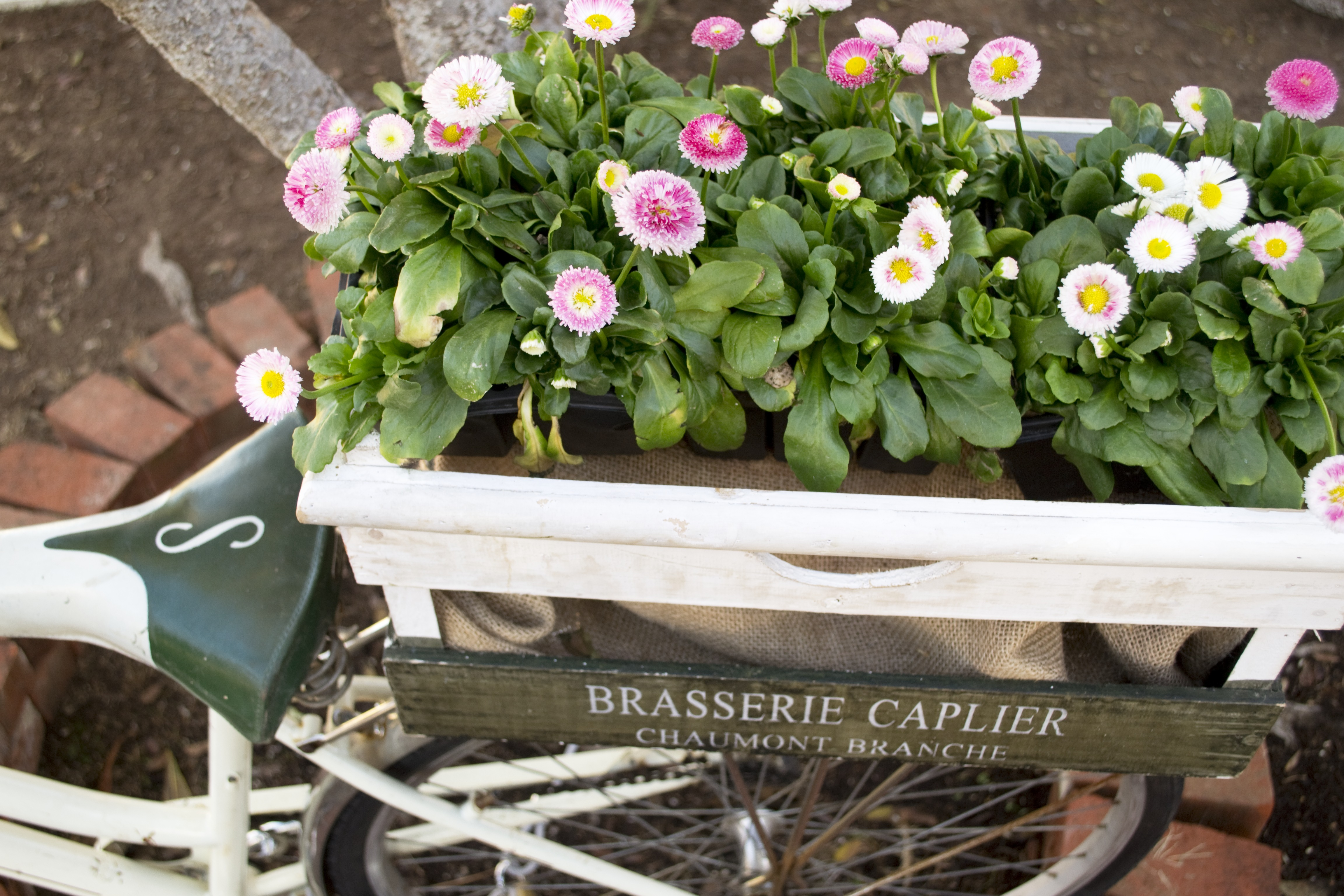 Flower Box on Bicycle