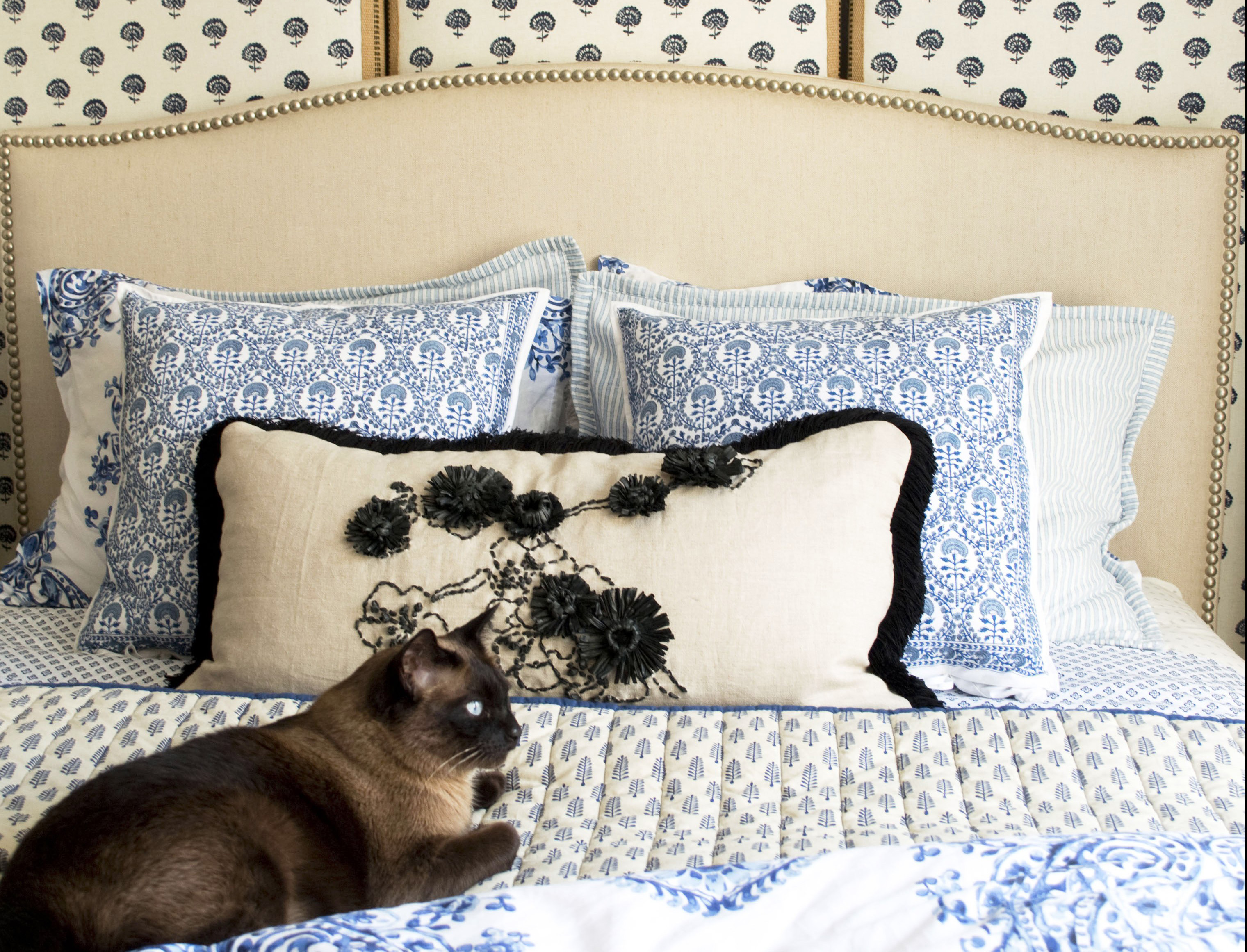 Cat on Blue Comforter Bed
