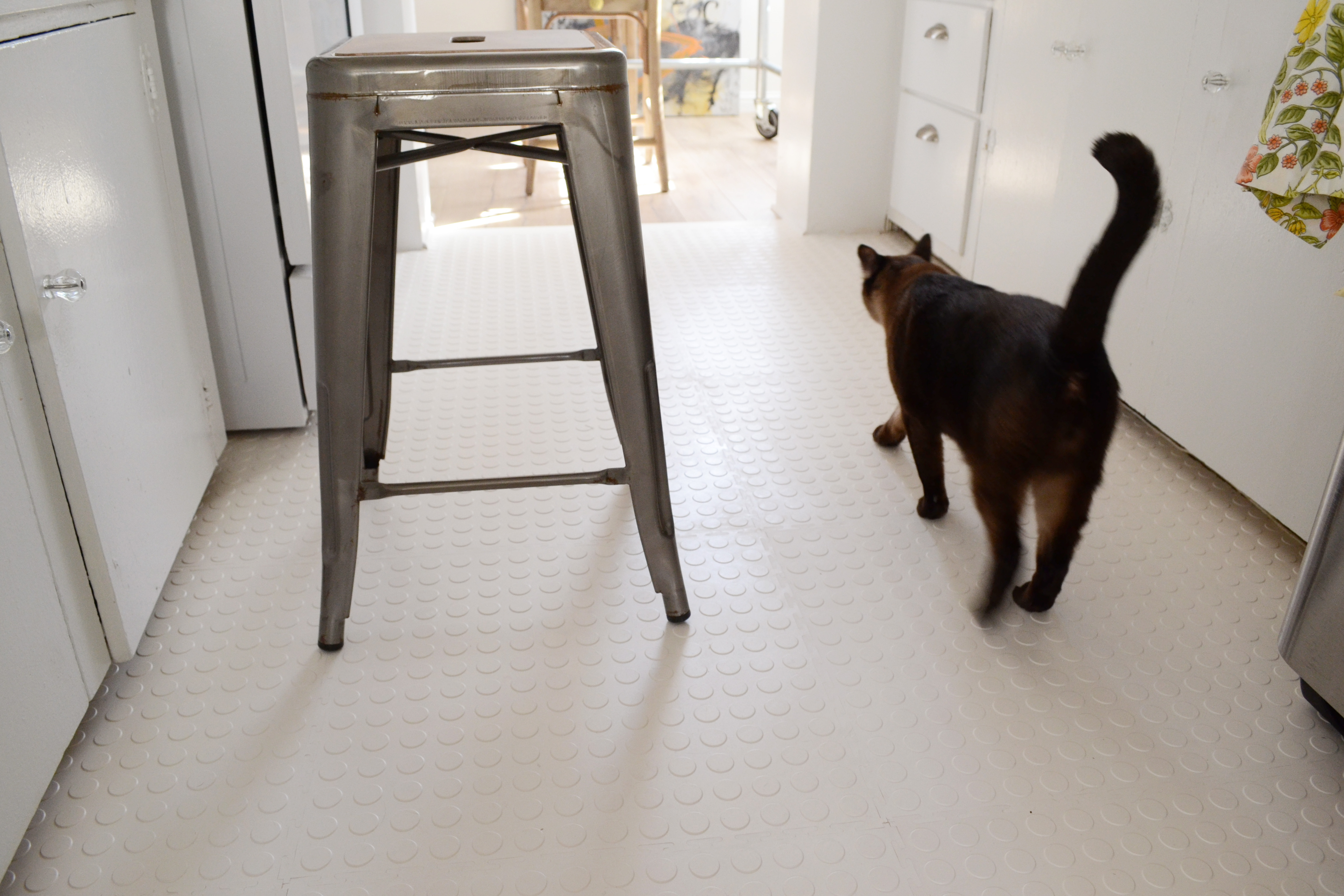 Final Cat On Rubber Floor 1 Diy Flooring
